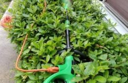 Hedge Trimming 101, DIY Widow