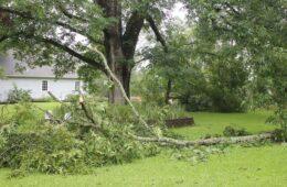 Tree Trimming 101, DIY Widow