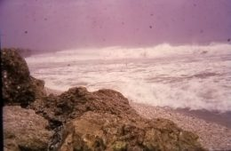 Typhoon Elsie and the Habu