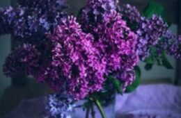 I Want to be Reminded of Lilacs