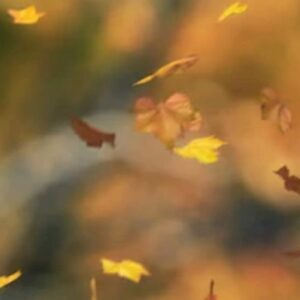 Leaves floating in the air